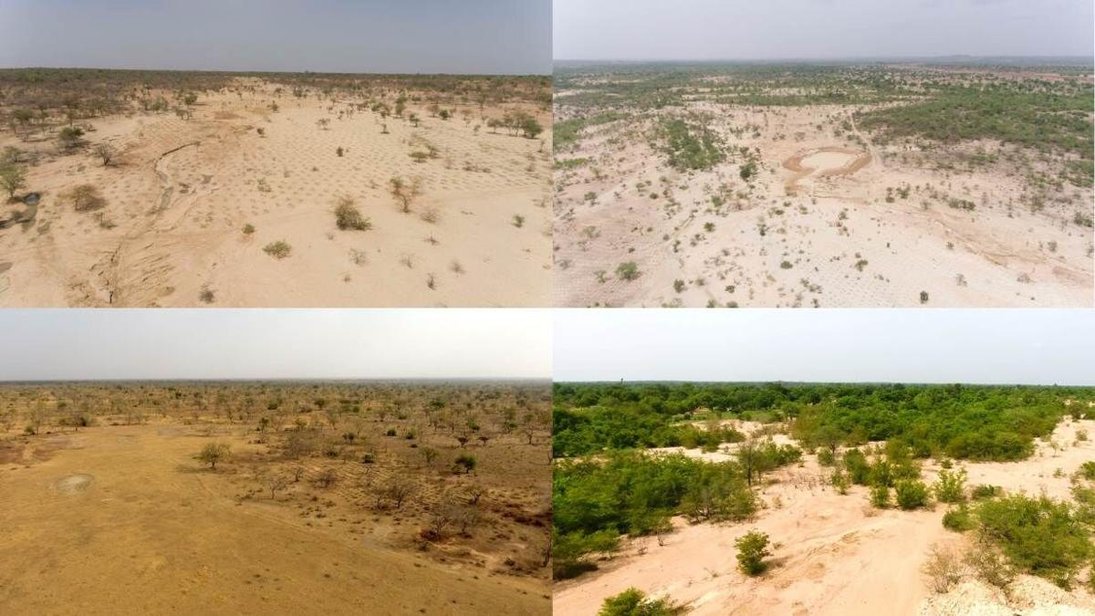 Africa's Great Green Wall aims for fresh growth spurt after sluggish start