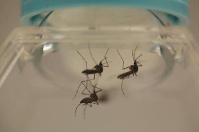 CHCC detects one suspected dengue case