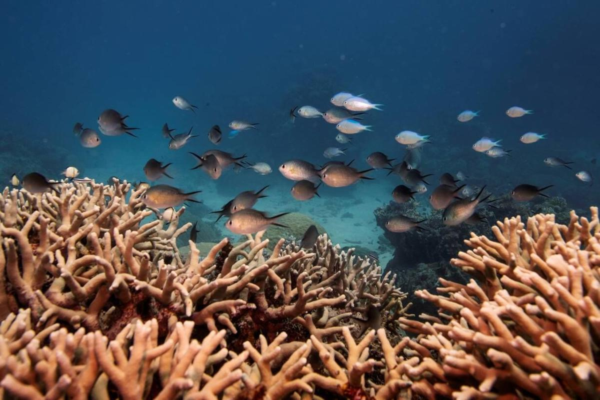 Threatened Caribbean coral reefs get a new ally: the insurance industry