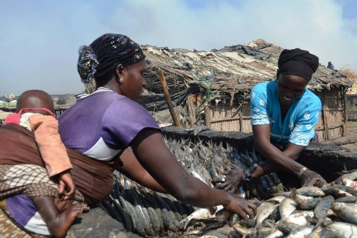Foreign fishing fleets drain West African waters 1