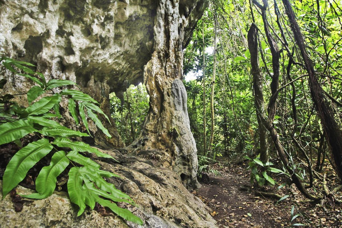 Ritidian - Interesting flora, fauna and rock formations