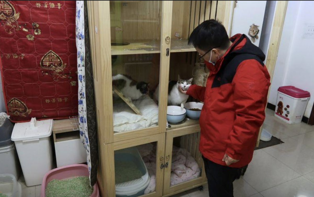 Animal activist in Wuhan happy to be back to routine rescues