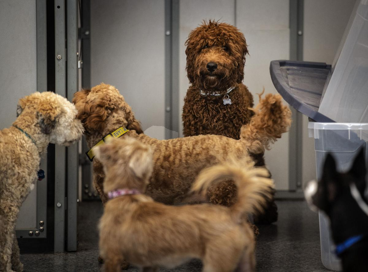 Families work to help pandemic pets cope without mom, dad