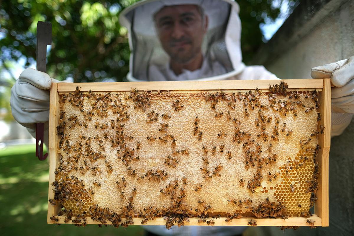 Guam's sweetest secret: locally grown Hafa Adai Honey 1