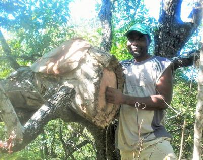 'Sweet business' of beekeeping helps protect Zimbabwe's forests