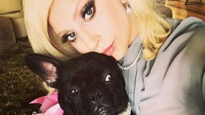 Lady Gaga offers $500K for her stolen French bulldogs