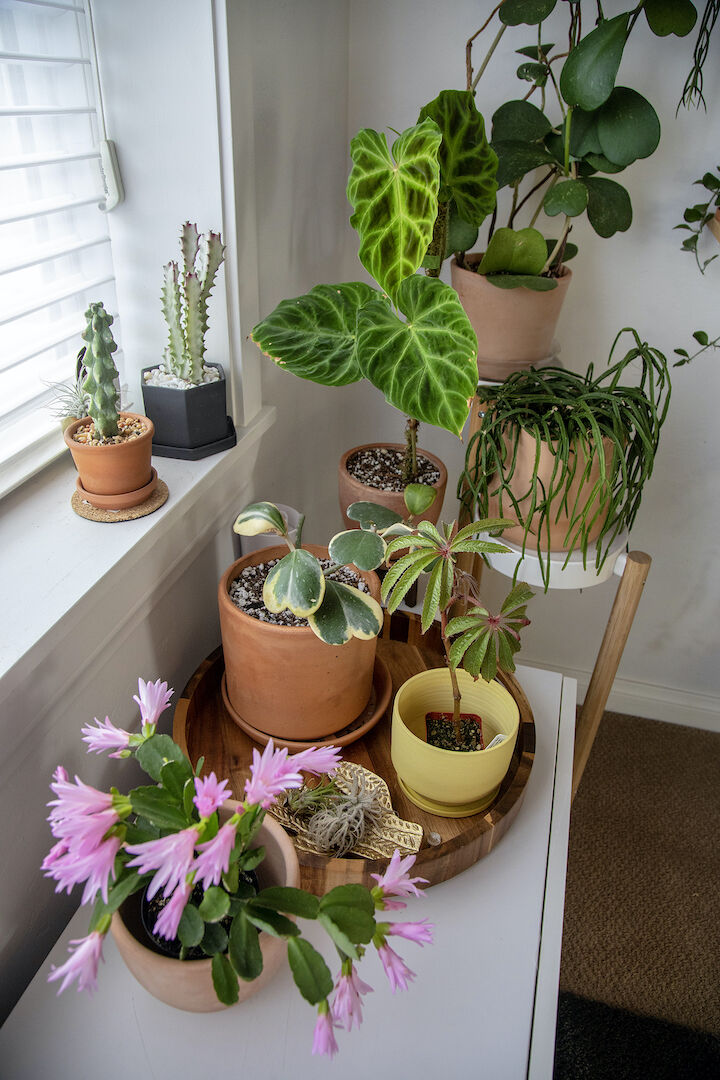 The worst things you can do when shopping for plants, according to plant shop owners