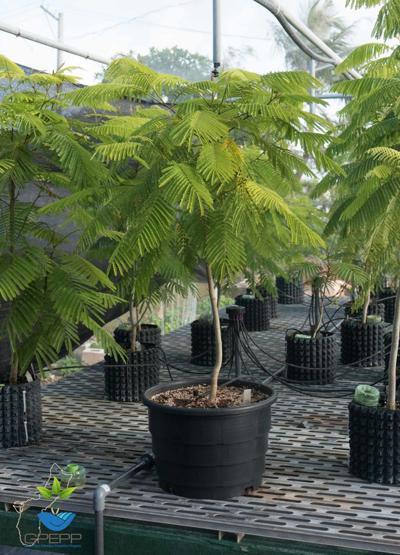 Today's tree planting postponed