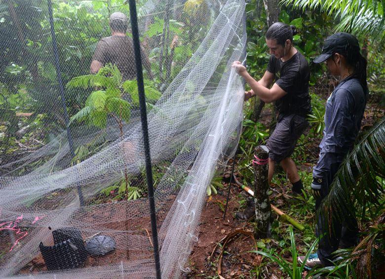 Guam has 18 rare tree survivors