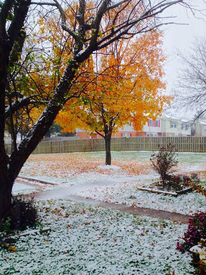 1snow-Teresa Lopez Manassas at 730am. More coverage now but there is now the dreaded wintry mix falling. Be safe..jpg