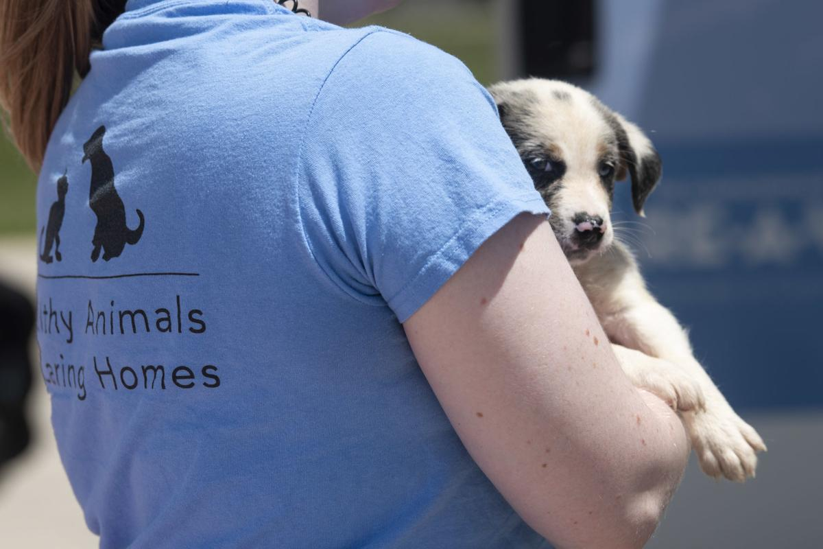 Puppy: Animals rescued from OK storms flown into Manassas May 24, 2019
