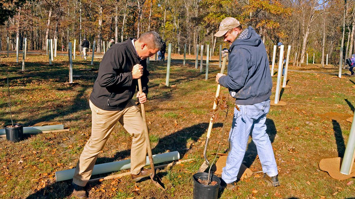 Pete Candland new trees at Silver Lake Park