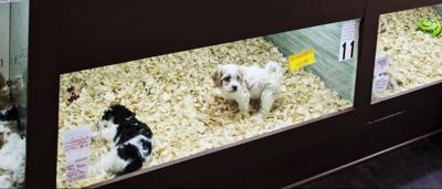 photo_ft_news_puppy shop-1 copy.jpg