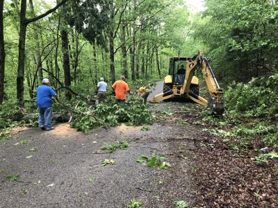 May 5 tree cleanup