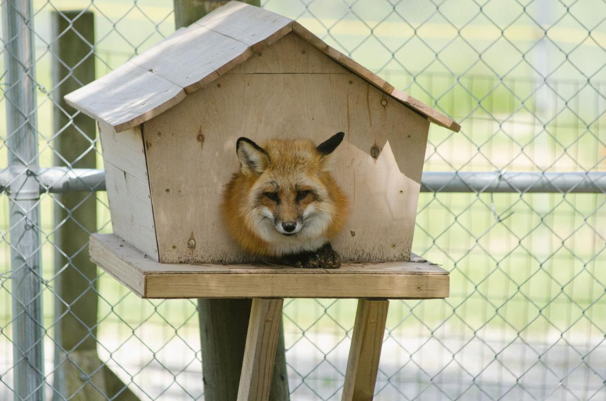 Other animals live there, too | Features | purdueexponent org