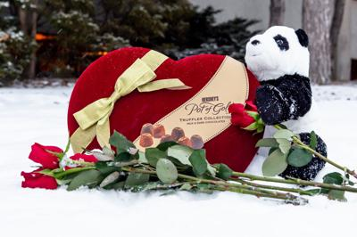 2/10/21 Valentines Day Photo Shoot