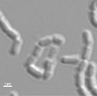 Bio-engineered probiotic 1/12/2019