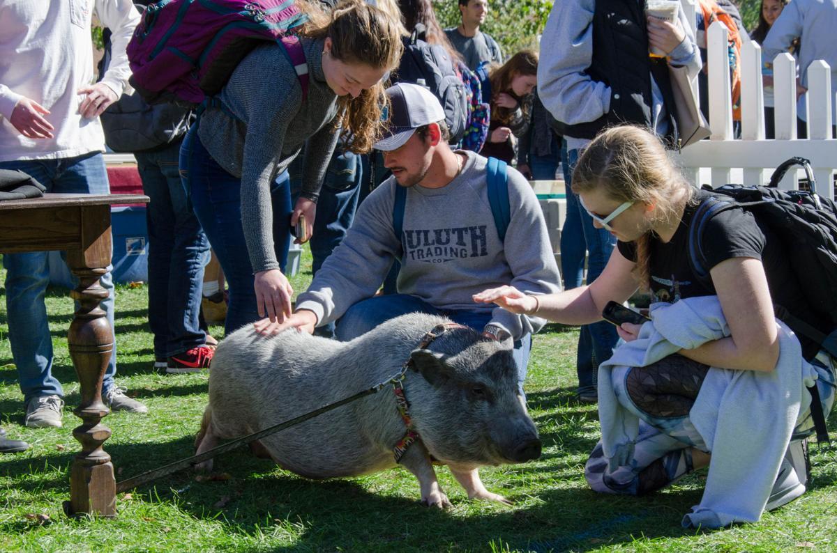 10/17/17 Petting Zoo, Leroy