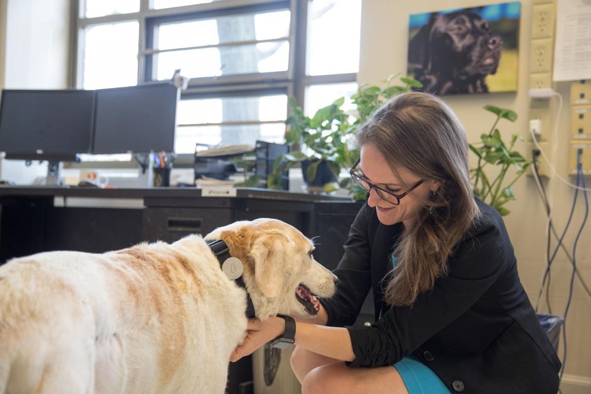 Can Anxiety Patients Be Prescribed Service Dogs