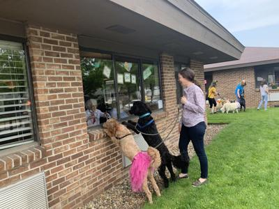 Dogs greet retirement community members in window