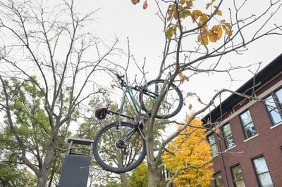 10/28/20 Daily Photo, Bike in Tree