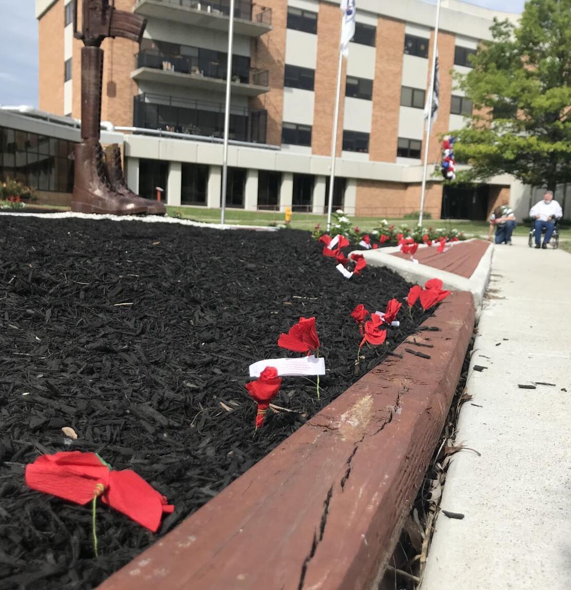 5/31/21 Veterans Day, Poppies