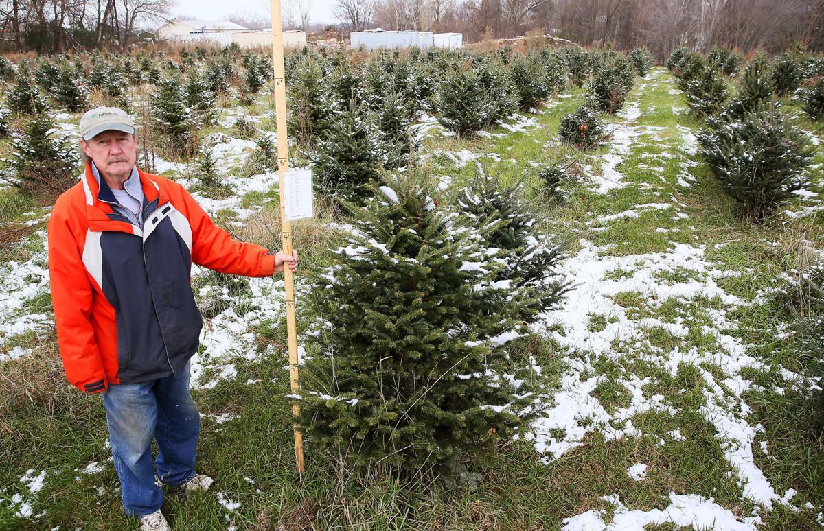 Wyffels Tree Farm