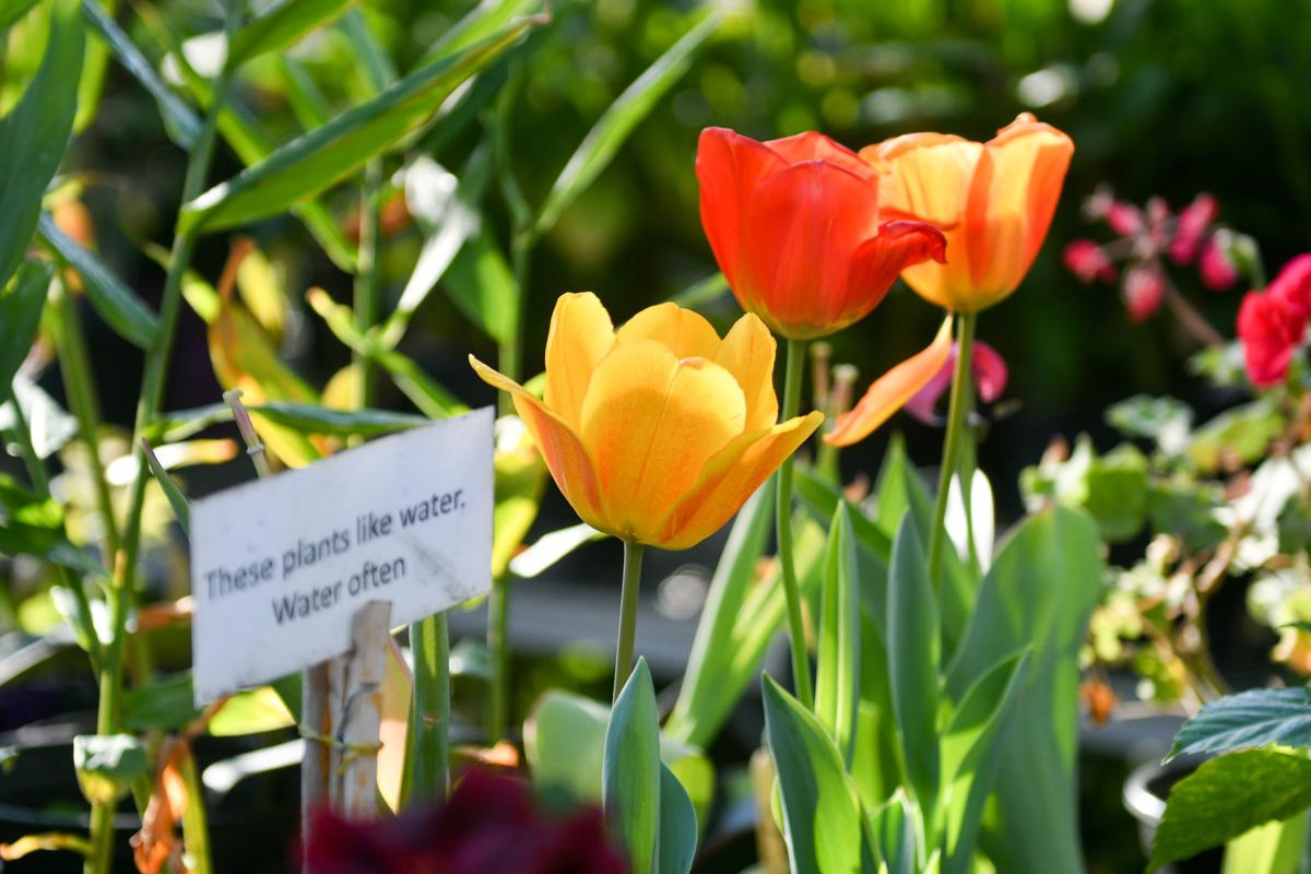 040119-mda-rad-gardenclasses-016a.JPG