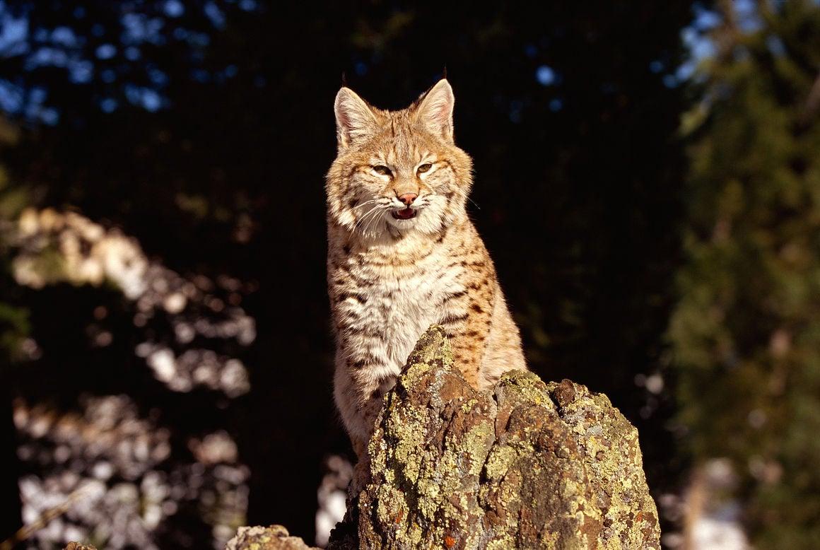 New York Natural Resources Animals