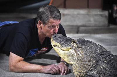 011019-alligator