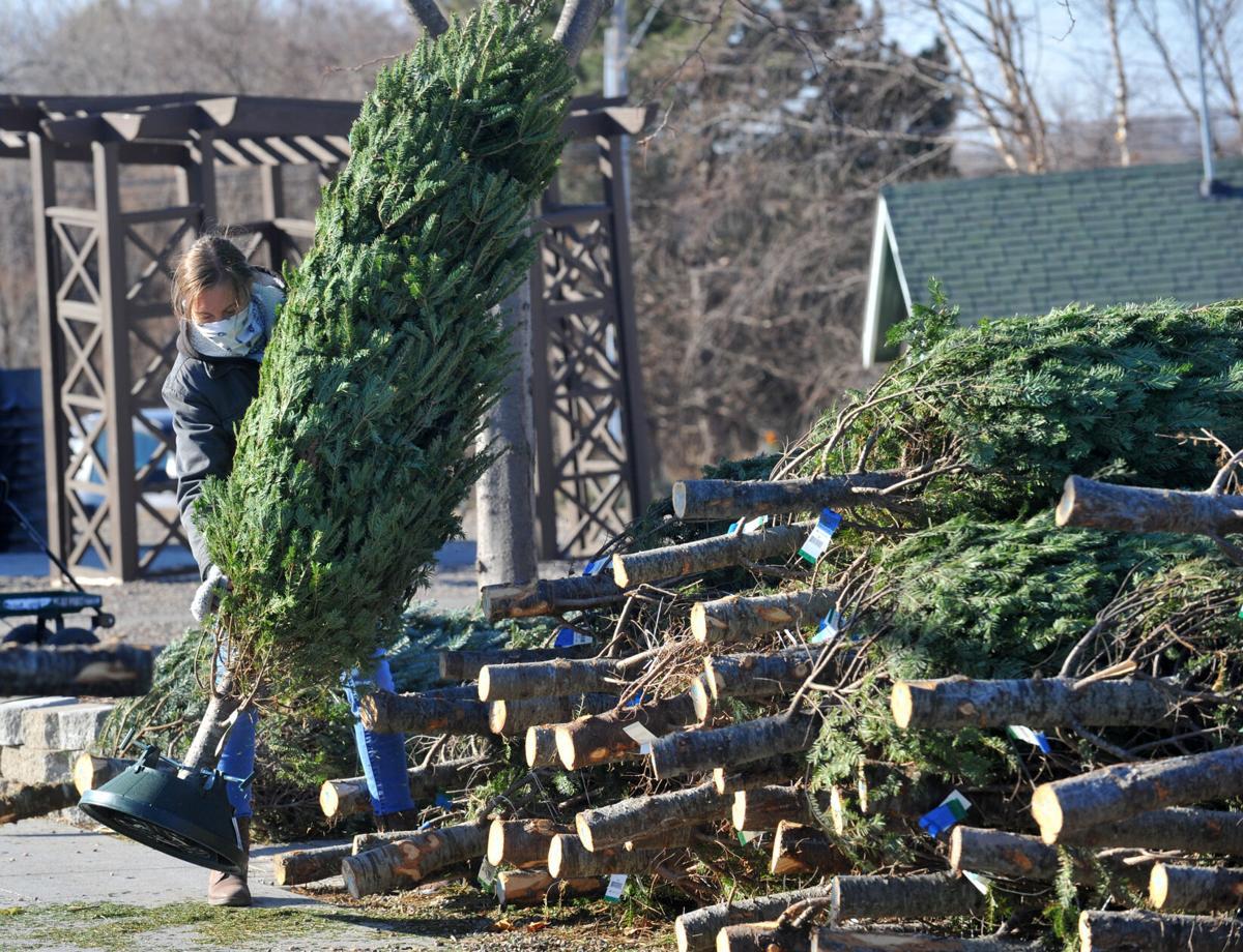 120520-qc-nws-trees-080