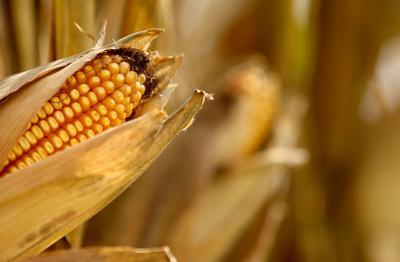 092518-harvest-006