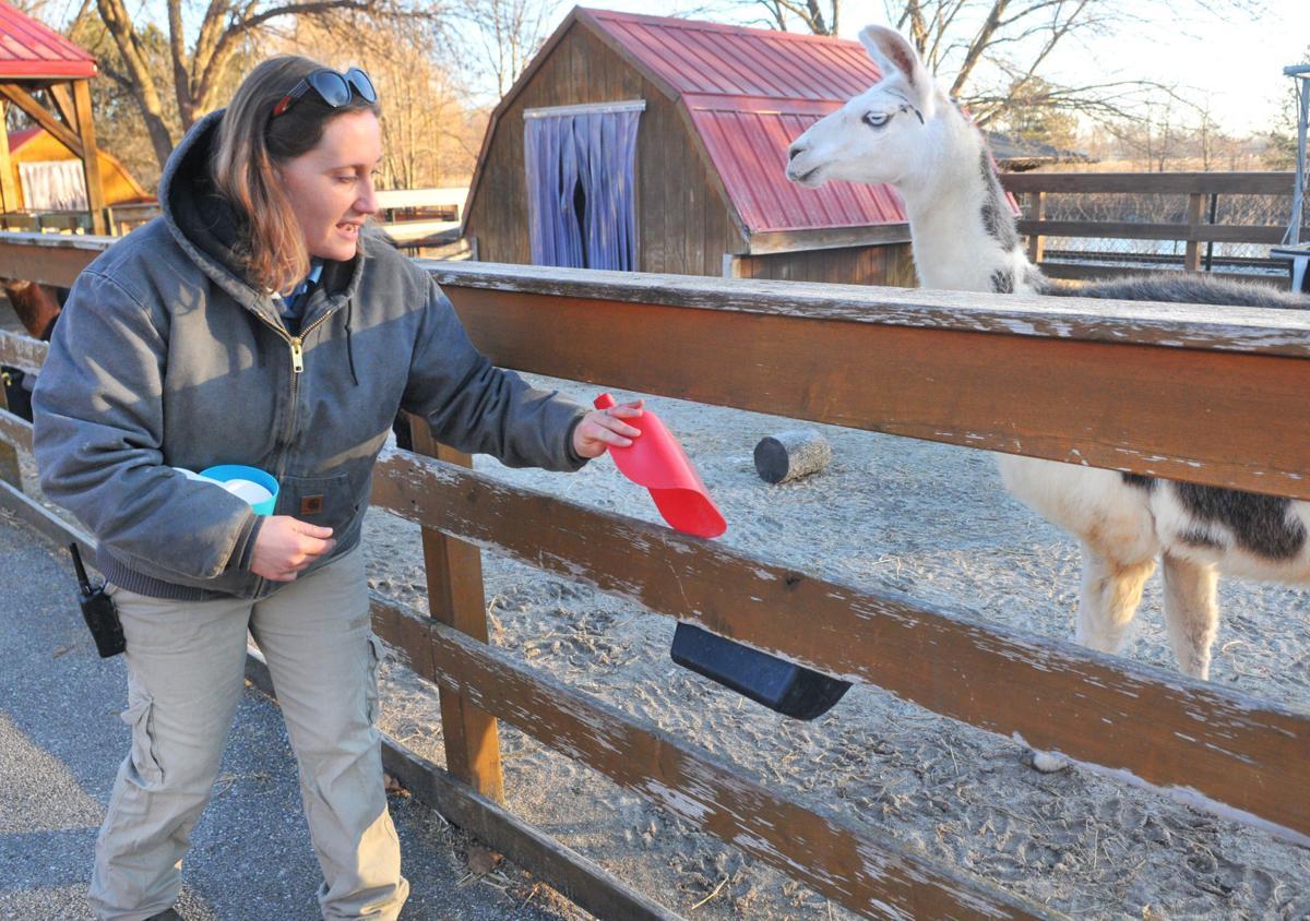 Progress: Niabi Zoo, zoo keeper