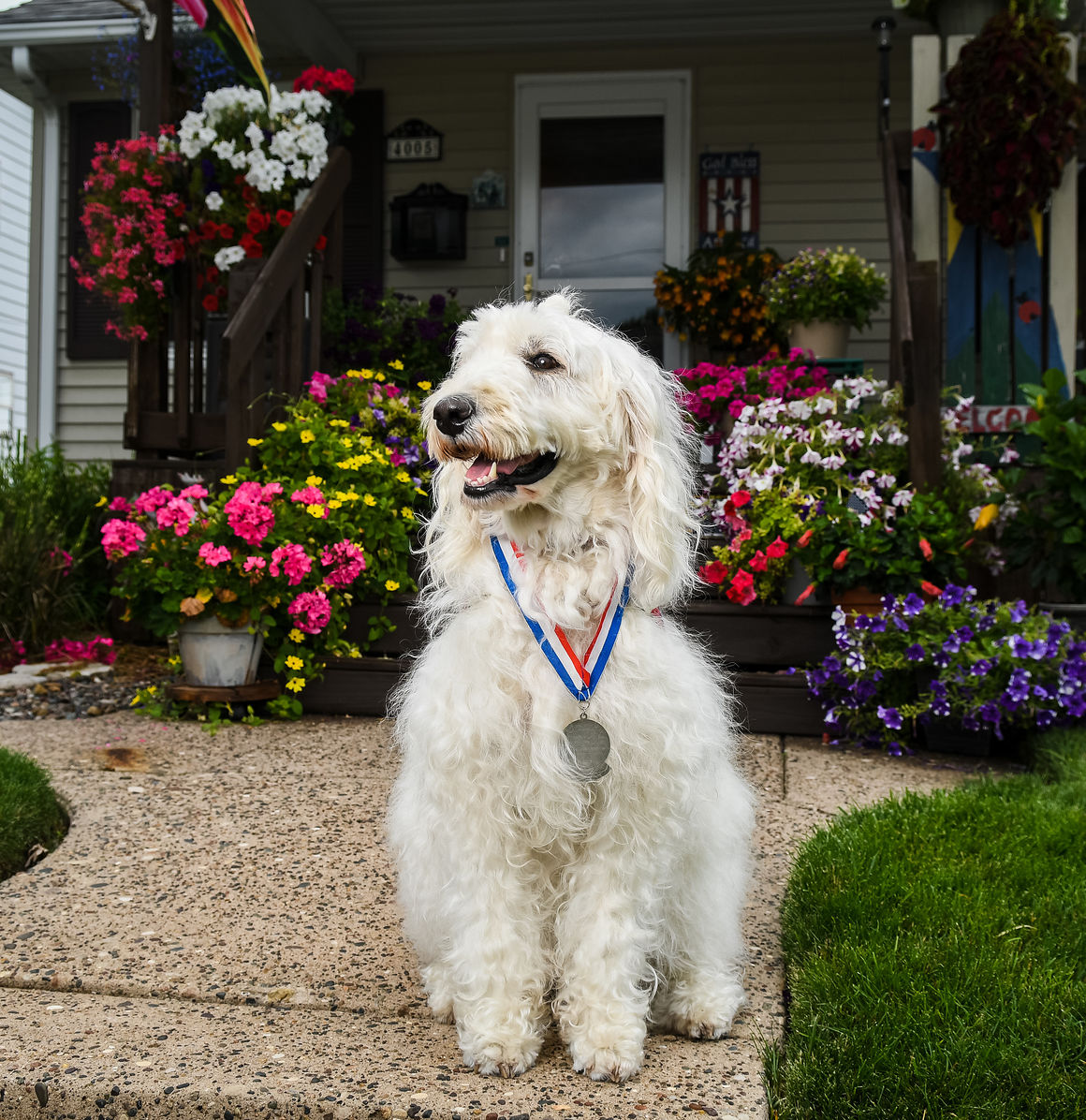 Meet Bailey: Radish crowns mixed-breed Labradoodle for this year's honor