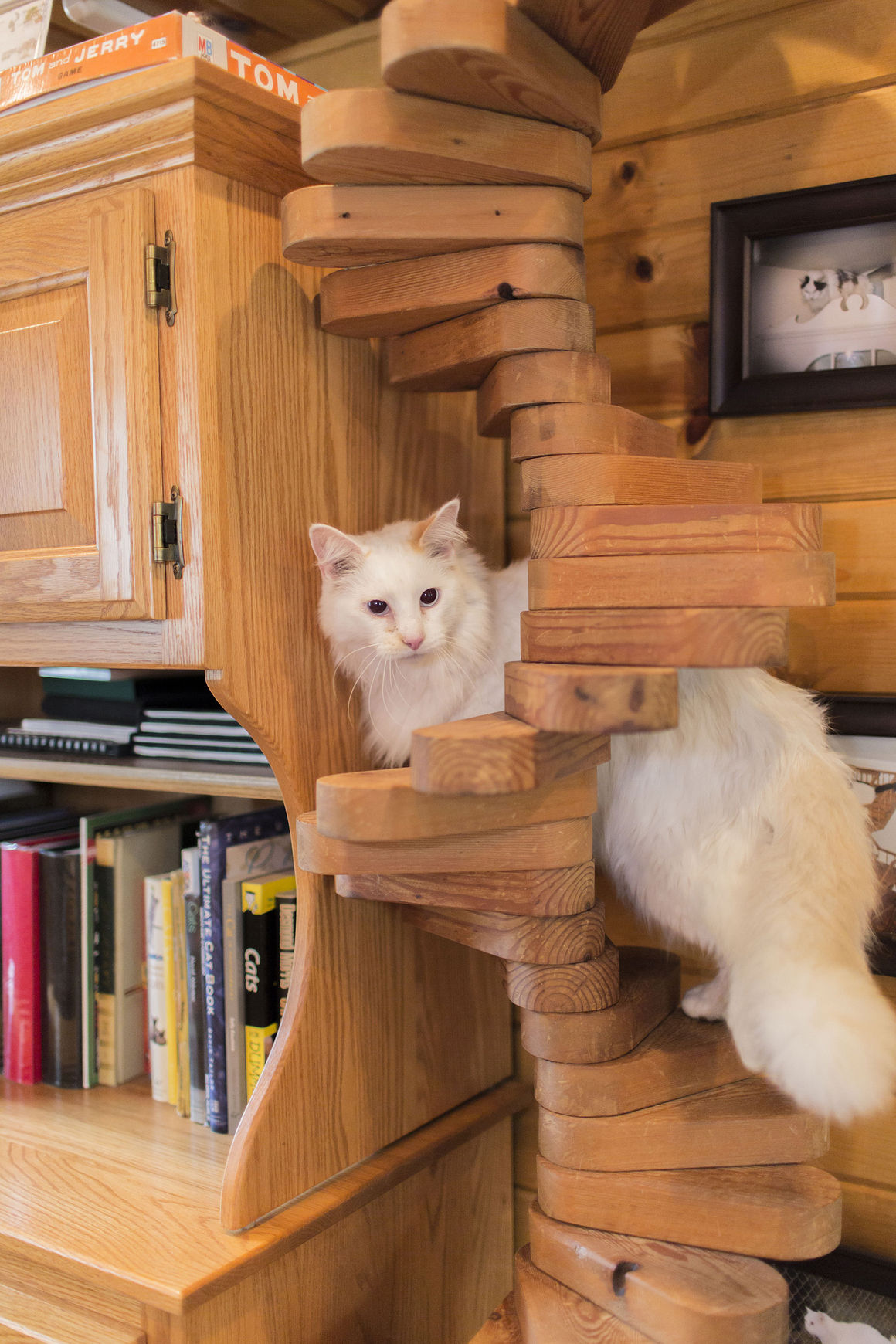 Catify to Satisfy Simple Solutions for Creating a Cat-Friendly Home