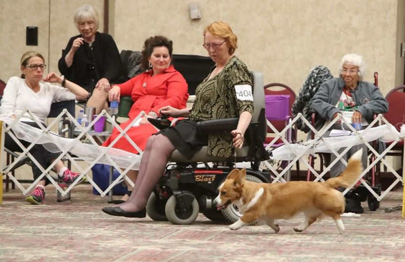 Geneseo woman, corgi to be honored by AKC