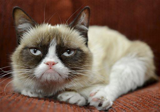 Friskies grumpy cat sweepstakes 2018