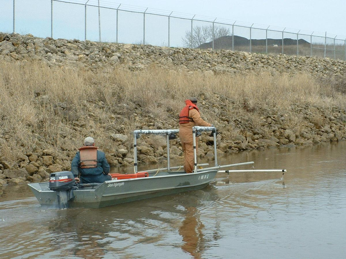 Electrofishing on the Mississippi River | | qconline com