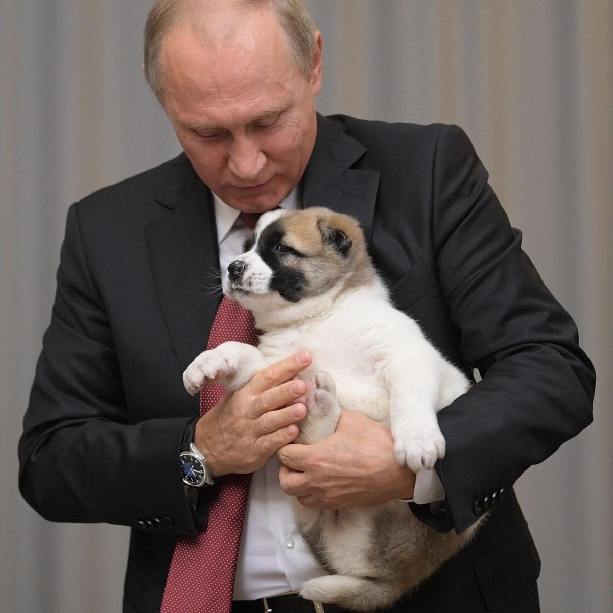 Russia S Dog Loving Leader Gets Another Puppy As Gift World Qconline Com