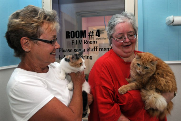 small shelter big heart animal shelter finishes with remodeling after january fire