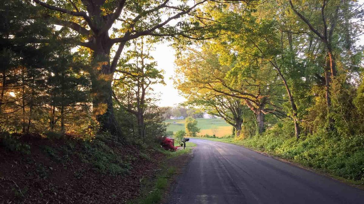 road-trees