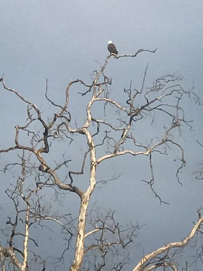 eagle-3-story.jpg