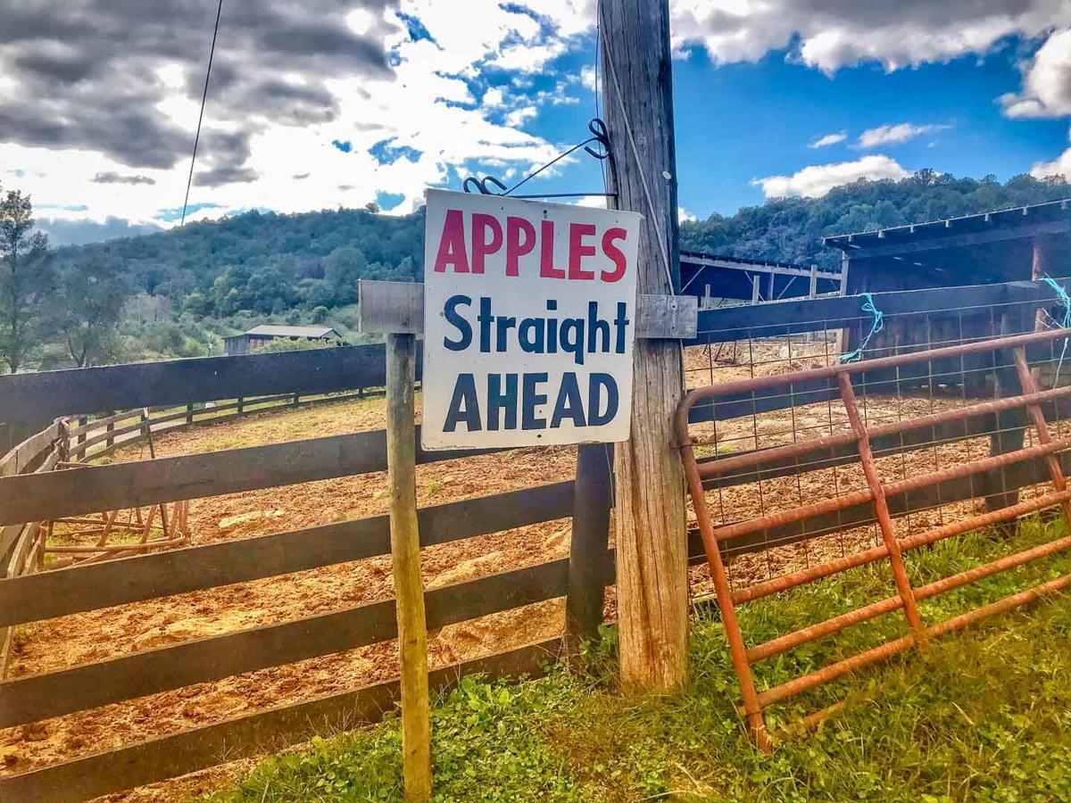apples6-8-story.jpg
