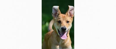 RAWL Dogs: Meet Brennan, your new best friend