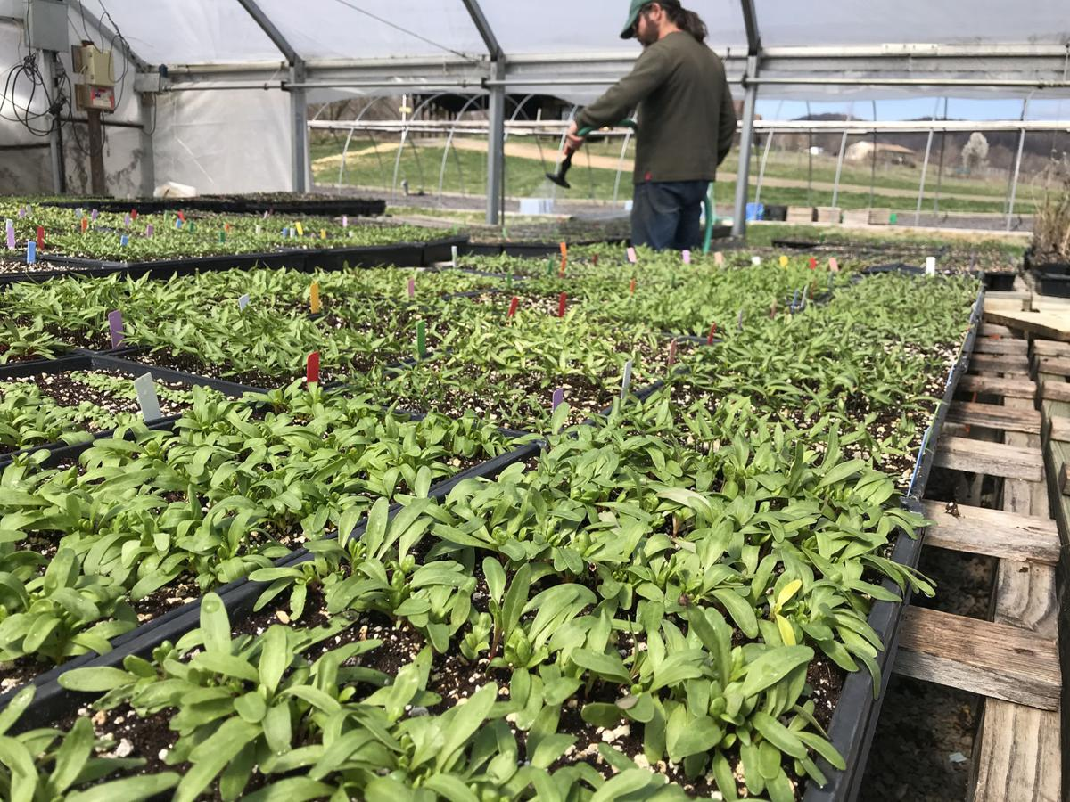 Waterpenny greenhouse
