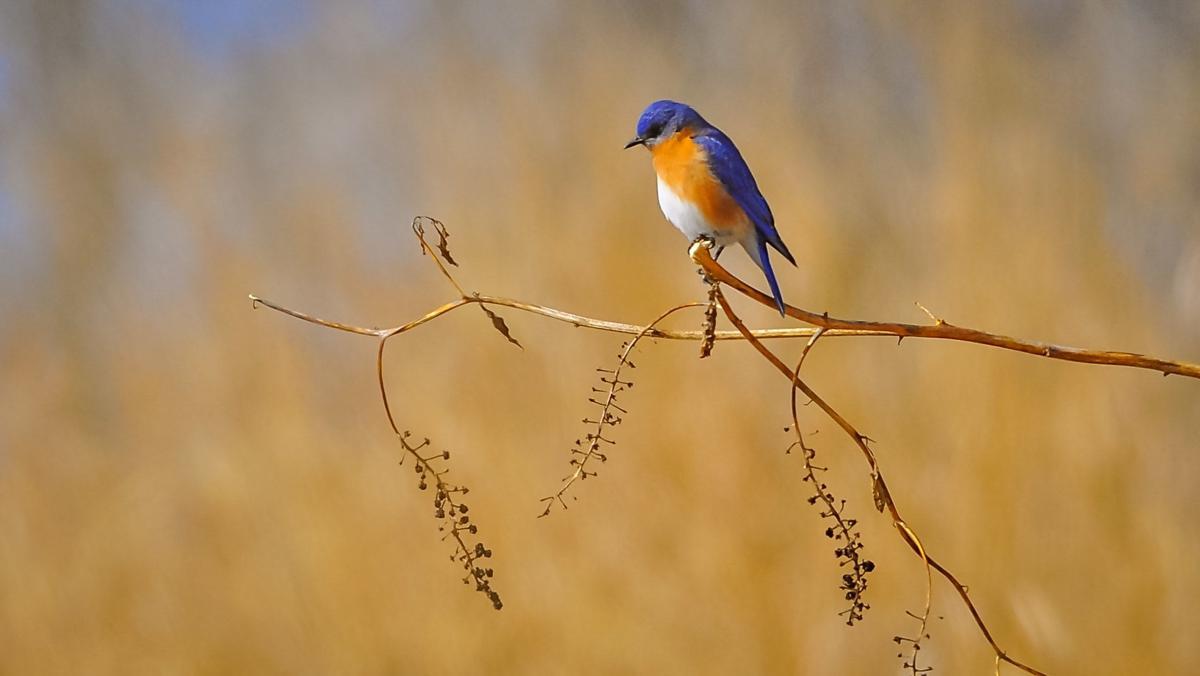 WildBlueBird