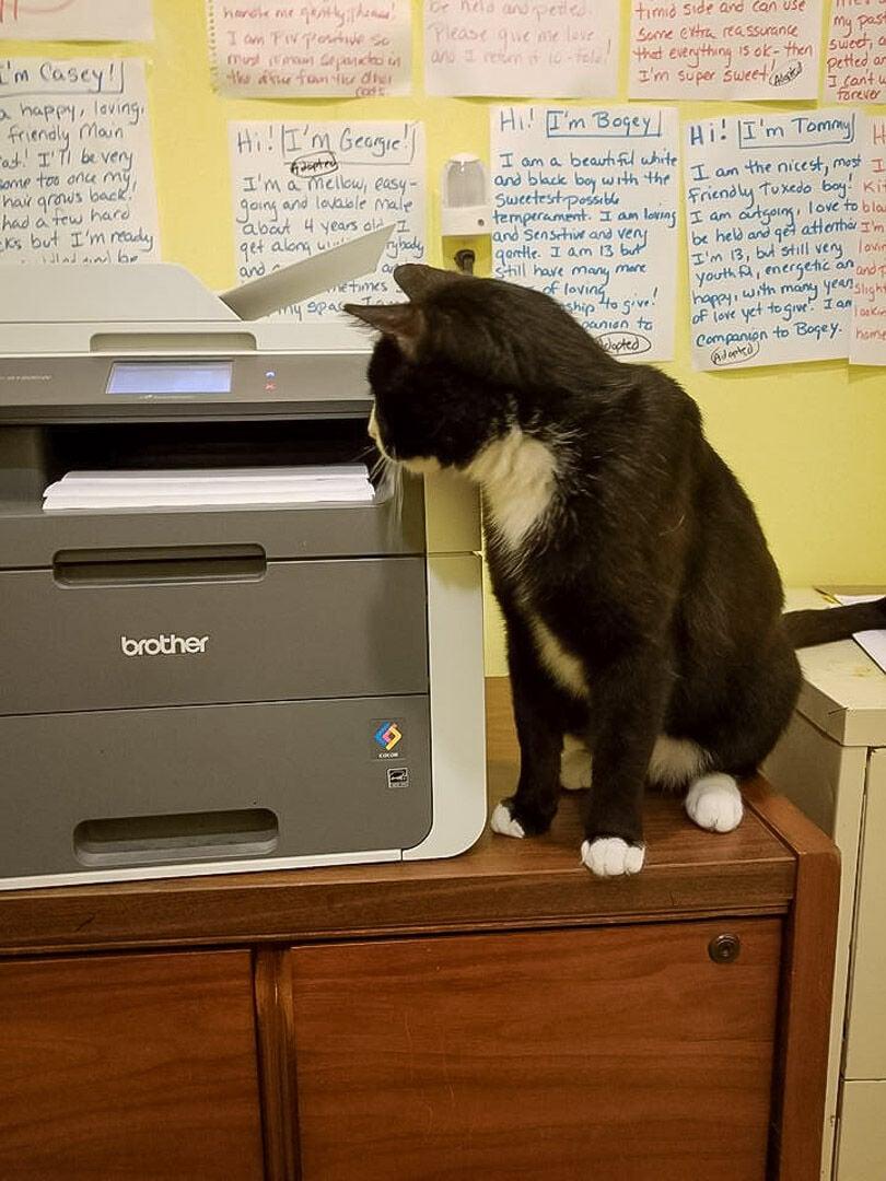 cats1-2-story.jpg