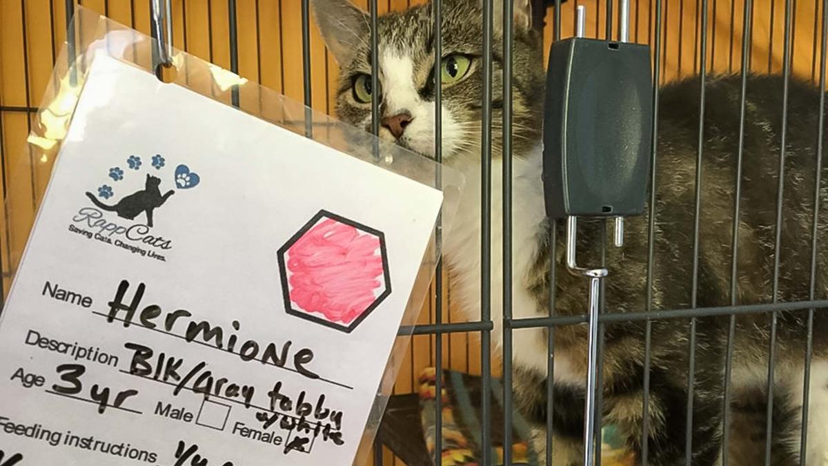cats2-2-story.jpg