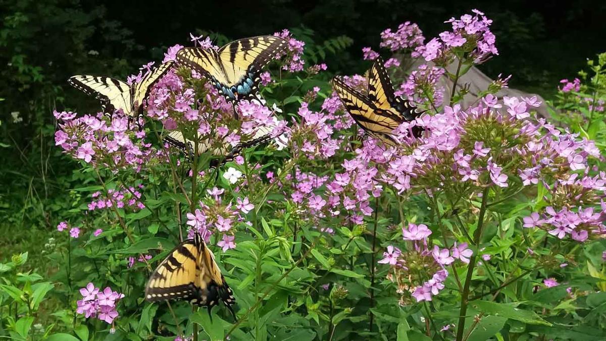 wildButterflies-25-w-story.jpg