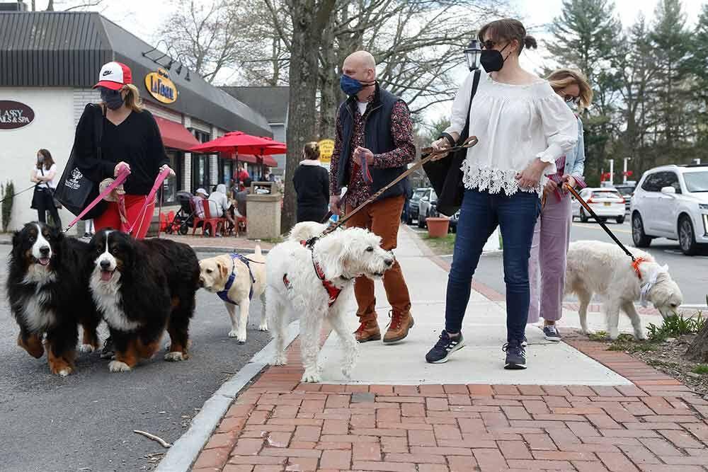 Dog Parade Group Shot.jpg